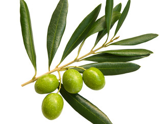 Green Olive- Week 9