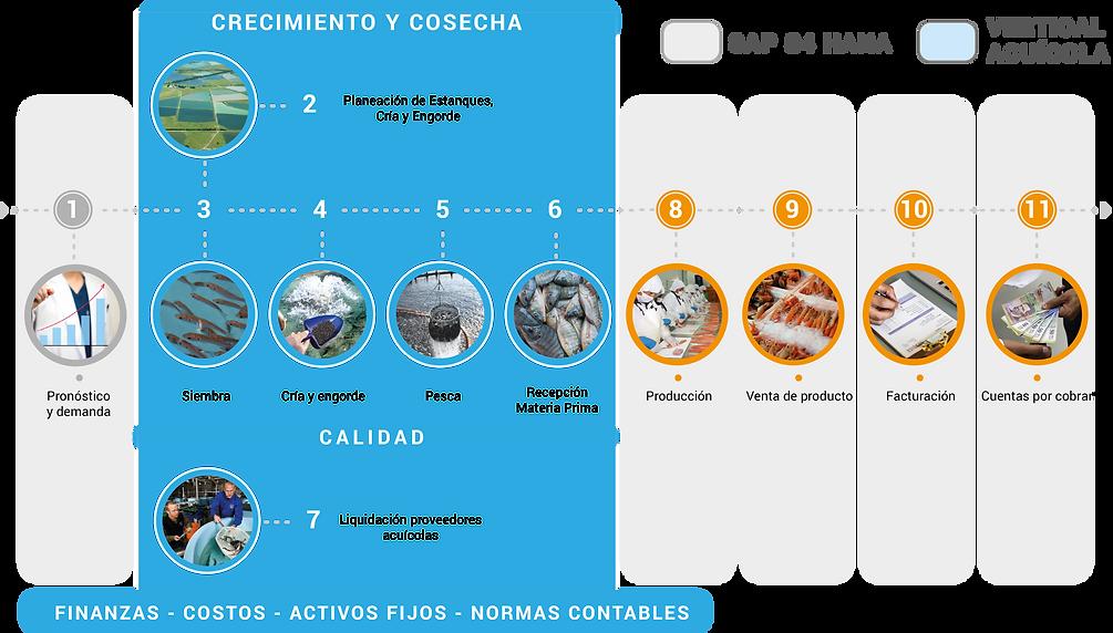 Peces process.png