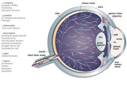 ILL_Eye