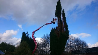 Man in a cherry picker carrying out tree