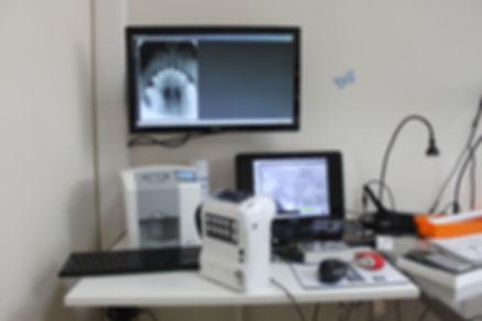 Учебный ветеринарный центр Денталвет, ветеринарная стоматология