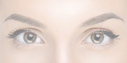 SPMU Eyebrows