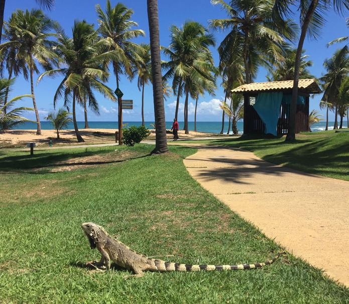Costa do Sauípe Resort