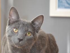 Tea Towel Cat makes modelling debut