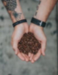 two hands filled with coffee beans