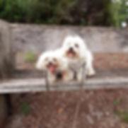 Charlie and MIgi.jpg