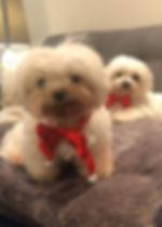 Charlie and MIgi bow tie.jpg