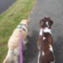 Dog walking1.jpg