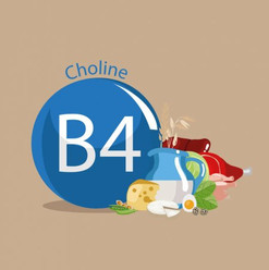 Vitamin B4 / Choline
