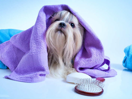 When Should You Start Grooming Your New Puppy?