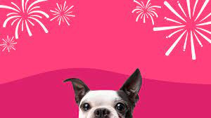 Protect Your Pets This 4th of July