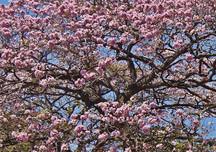 Natural-Pact_reforestaci¢n_Roble-sabana