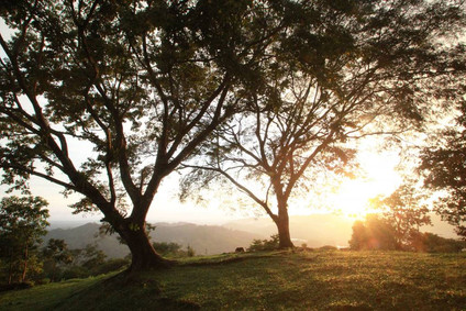 NP27-natural-pact_conservacion_tarde-ser