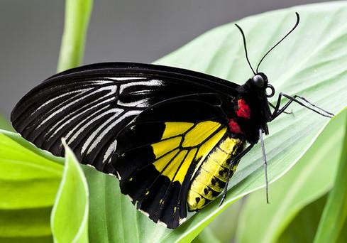Natural-Pact_Papillon_1.jpg