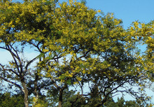 Natural-Pact_reforestaci¢n_Guachipelin.j