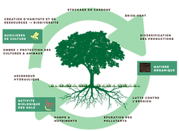 Tree graphic.png