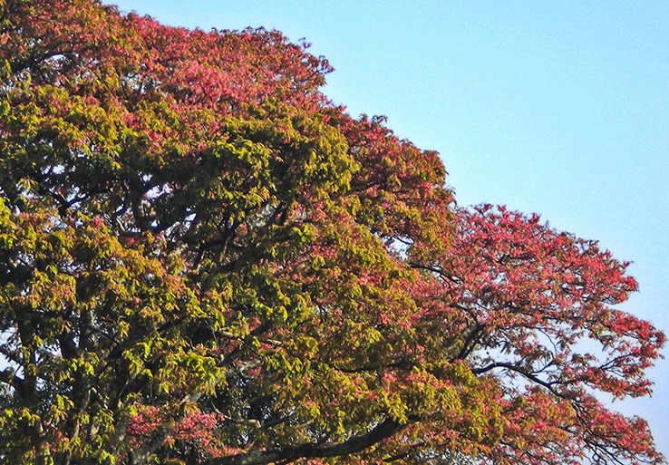 Natural-Pact_reforestaci¢n_Carao.jpg