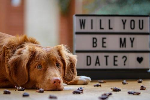 Amazon echo giving dating advice