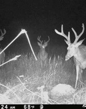 Deer On Deer Candy.jpg