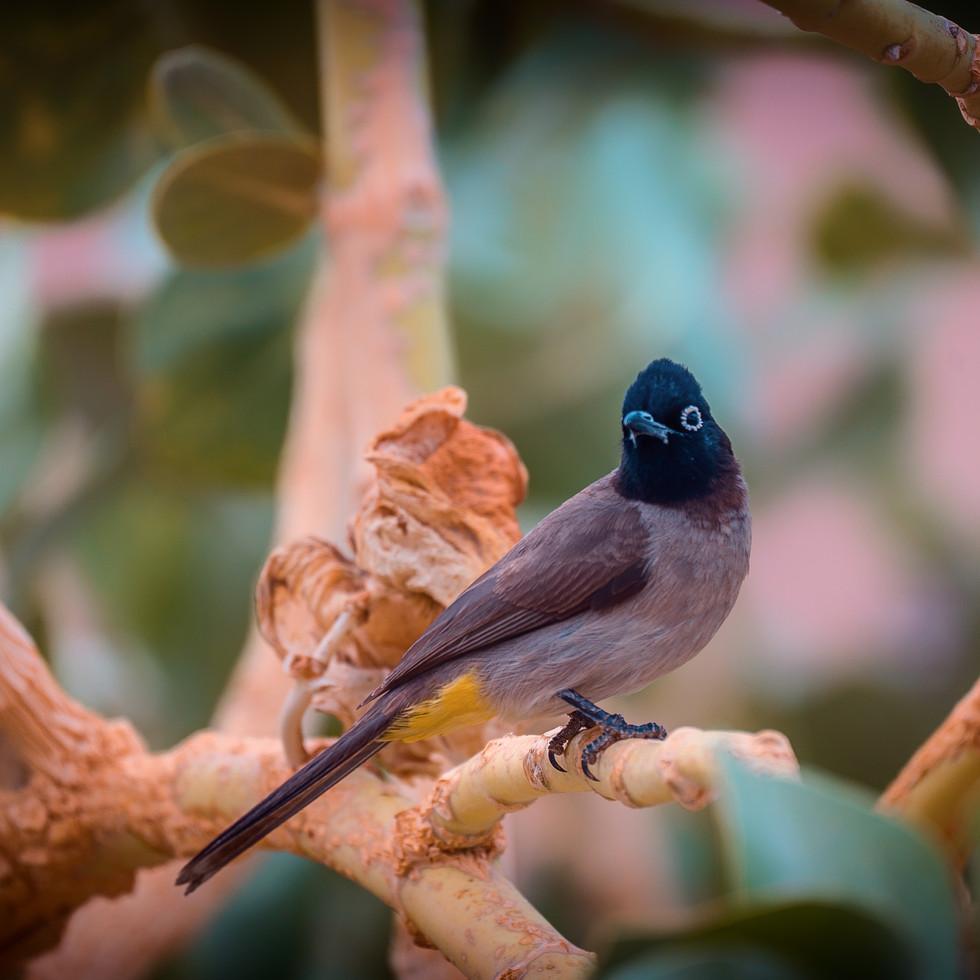 negev_bird--2.jpg