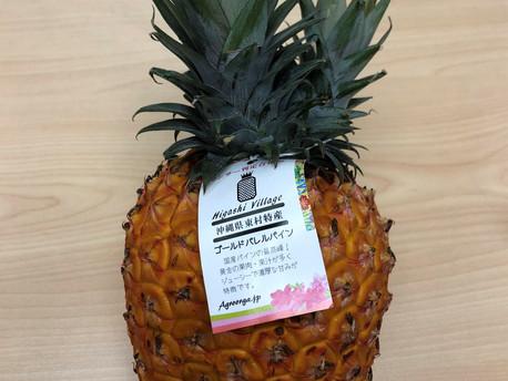 沖繩菠蘿盛產中!