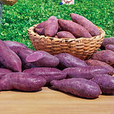 06_Purple potato-main01.jpg