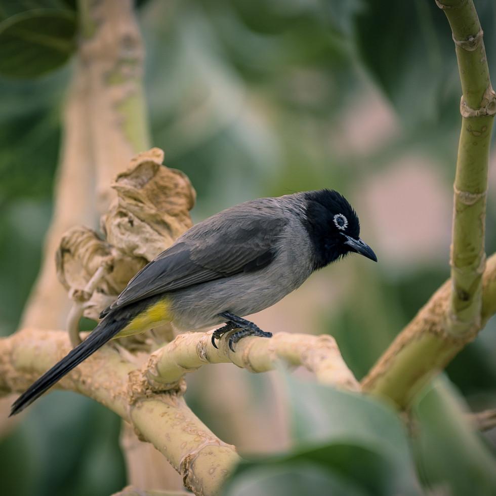negev_bird-2-2.jpg