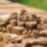 05_Brown sugar-sub02.jpg