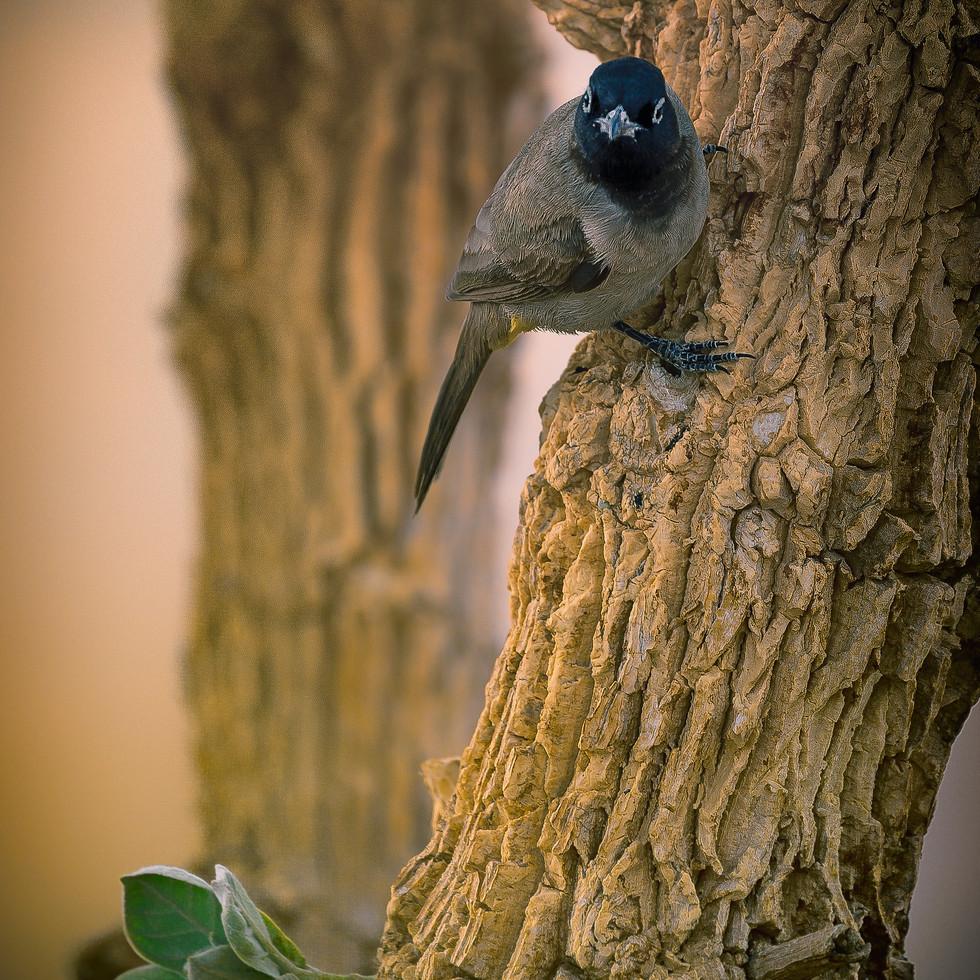 negev_bird-2.jpg