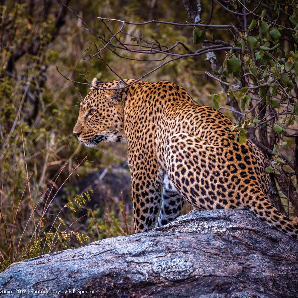 tanzania wildlife 2--78.jpg