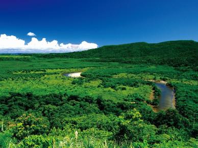 「奄美‧沖繩」預定將會登錄成世界自然遺產