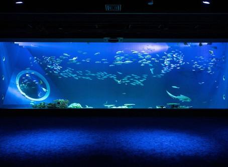 DMM Kariyushi 水族館開幕