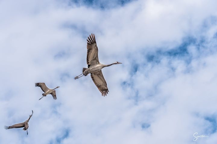 HULA VALLEY BIRDS! A few months back my