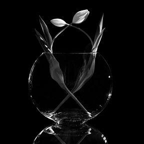 chiaroscuro vase two tulips.jpg