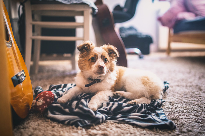 Quick Tips to Make Apartment Living with Pets Easy