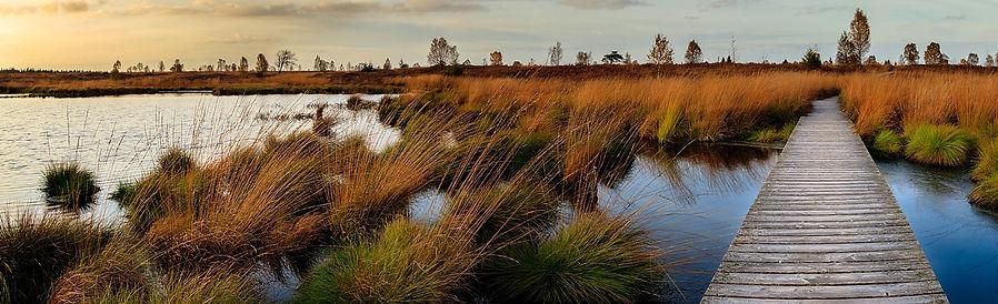 sunset-wetlands.jpg
