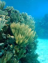 Soft corals 2 10.4.04.jpeg