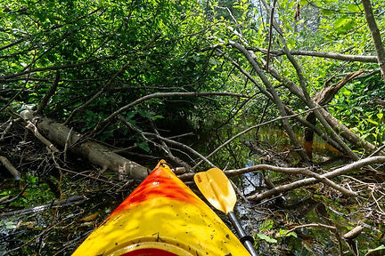 North Branch Otter River.jpg