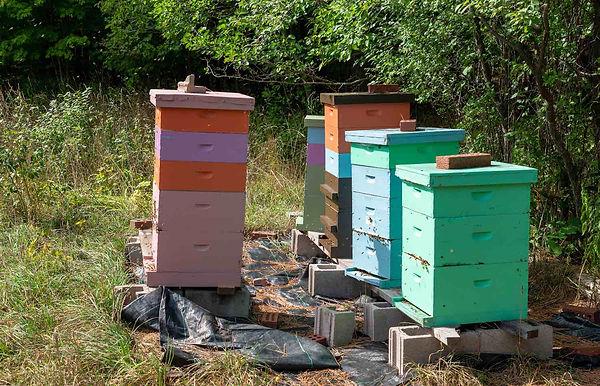 Bees - September 2021.jpg