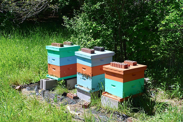 Beehives on a sunny day