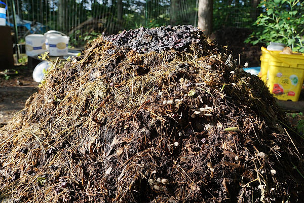 It's a fungi and mold filled compost pile!