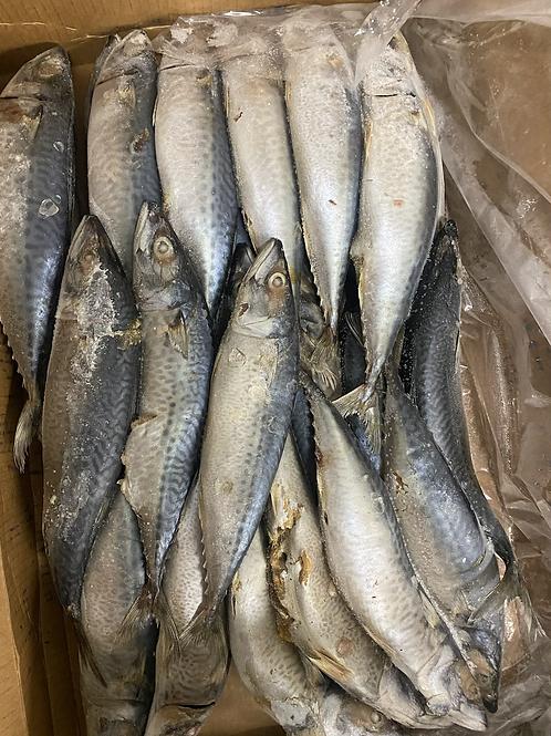 Mackerel carton 10kg