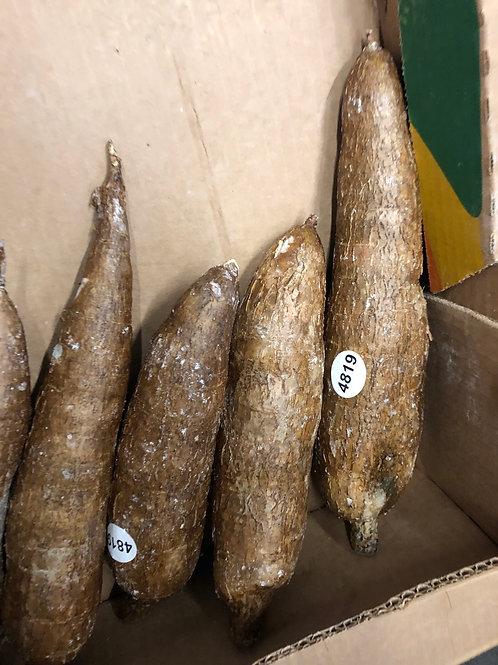 Manioc frais ( le prix à la lbs)