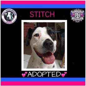 stitch adopted.jpg