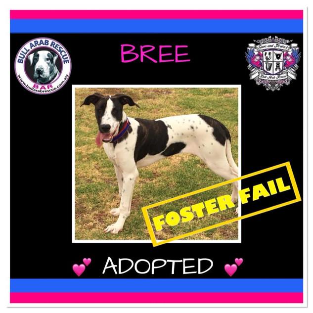 bree adopted.jpg