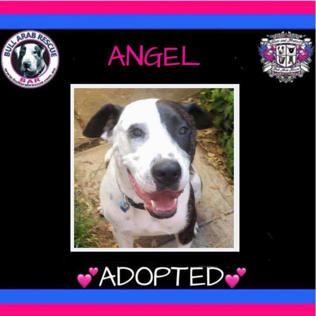 angel adopted.jpg