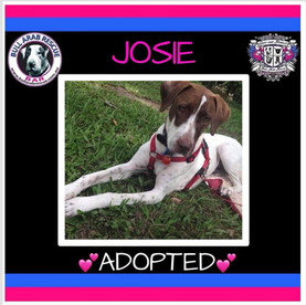 josie adopted.jpg