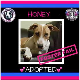 honey adopted.jpg