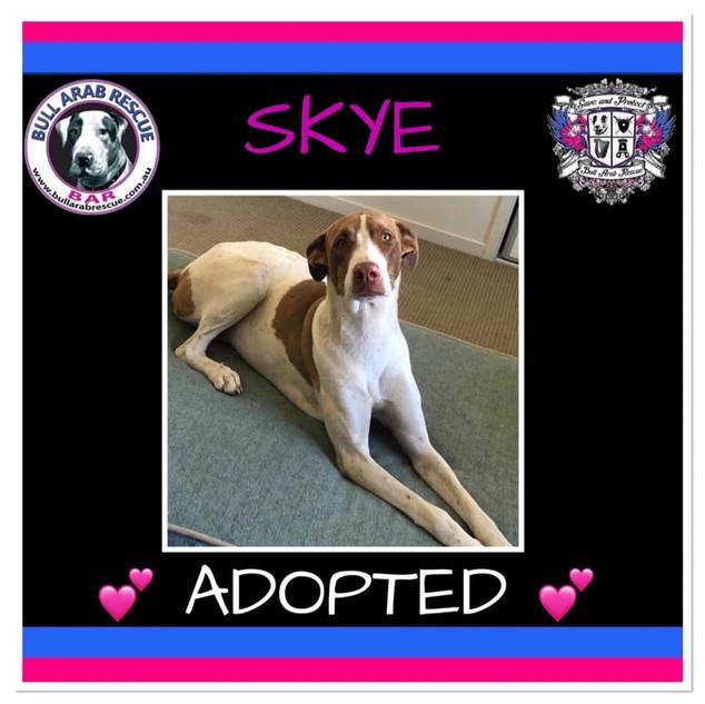 skye adopted .jpg