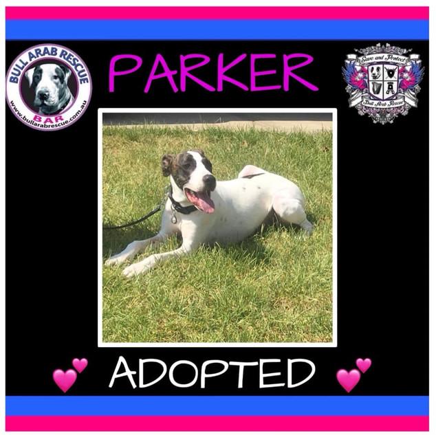 parker adopted.jpg